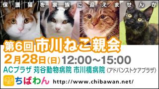 ichikawaneko06_320x180