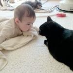 taiken_cat_botan_01