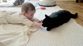taiken_cat_botan_03