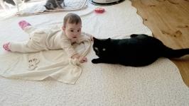 taiken_cat_botan_04