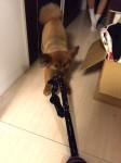 taiken_dog_mansaku_04