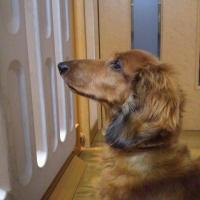 taiken_dog_hinoki_01