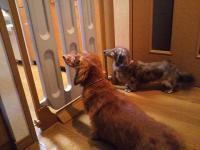 taiken_dog_hinoki_02
