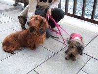 taiken_dog_hinoki_03