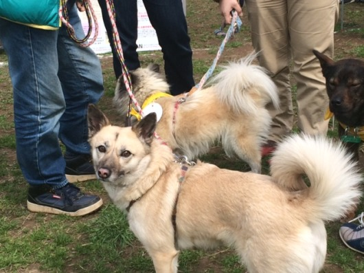 event-160321-adachi_卒業犬2