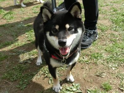 event-160321-adachi_卒業犬1