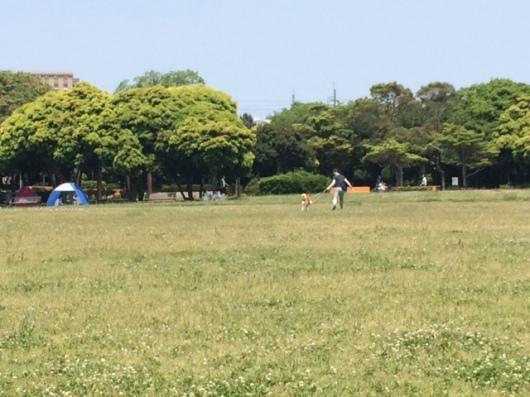 写真6 芝生