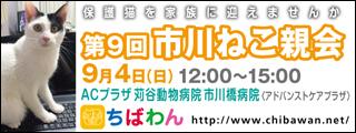 ichikawaneko09_320x120