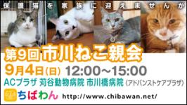 ichikawaneko09_320x180