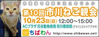 ichikawaneko10_320x120