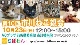 ichikawaneko10_320x180
