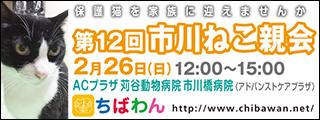 ichikawaneko12_320x120