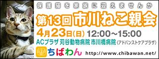 ichikawaneko13_320x120