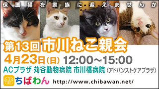 ichikawaneko13_320x180