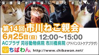 ichikawaneko14_320x180
