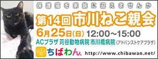 ichikawaneko14_320x120