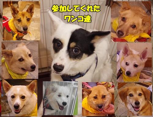 event-170528-katsushika_参加ワンコ達9頭
