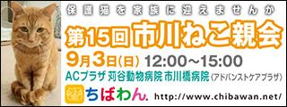 ichikawaneko15_320x120