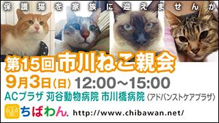 ichikawaneko15_320x180