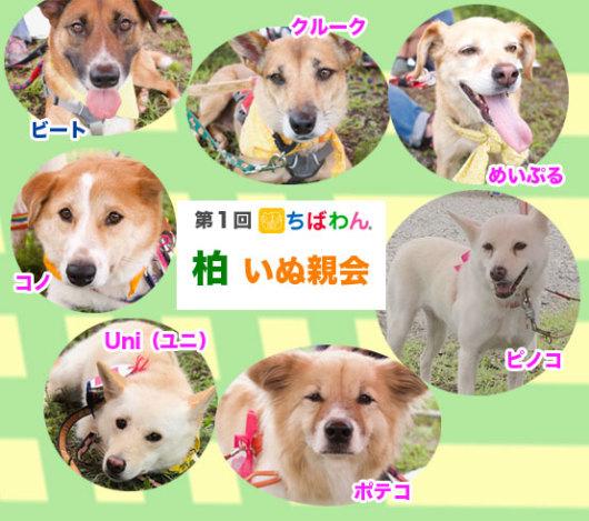 sanka_dogs_001