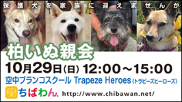 kashiwa02_320x180