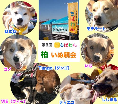 sanka_dogs_002