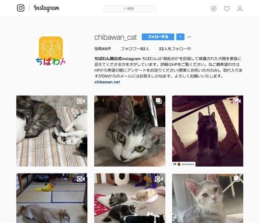 neko-instagram