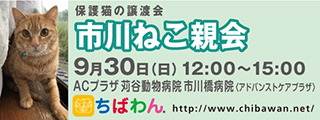 20180930ichikawa_320x120