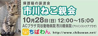 20181028ichikawa_320x120