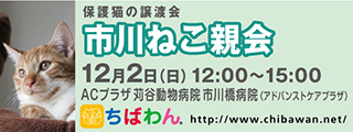 20181202ichikawa_320x120