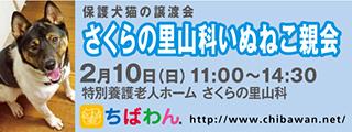 20190210sakura_320x120