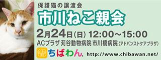 20190224ichikawa_320x120
