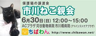 20190630ichikawa_320x120