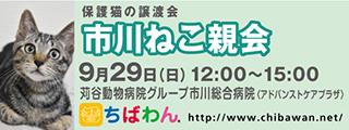 20190929ichikawa_320x120